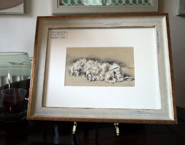 White Sealyham - lying on side 1930's print by Lucy Dawson - Sea D4